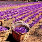 حراج عصاره زعفران هاتی کارا ارزان