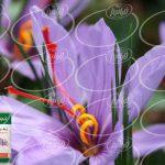 آخرین نرخ لحظه ای قطره زعفران برای صادرات