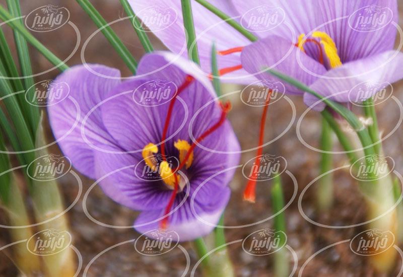 لیست قیمت زعفران 4 گرمی با برندهای مختلف
