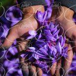 مرکز پودر سوخاری زعفرانی سحر خیز 300 گرمی