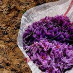 تولید عصاره زعفران با بالاترین درجه کیفی